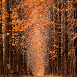 brown tree bench autumn fallenleaves