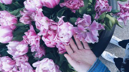 tulips look like rose keukenhof