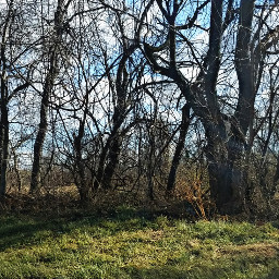 freetoedit dpcspringgrass treesoflife springbreak2017