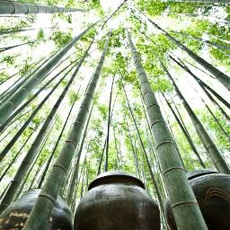 sky straight jar green bamboo