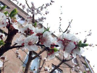 spring freetoedit