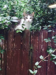 freetoedit kitty