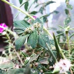prettyweeds closeupshot afternoonlight dispersion dew