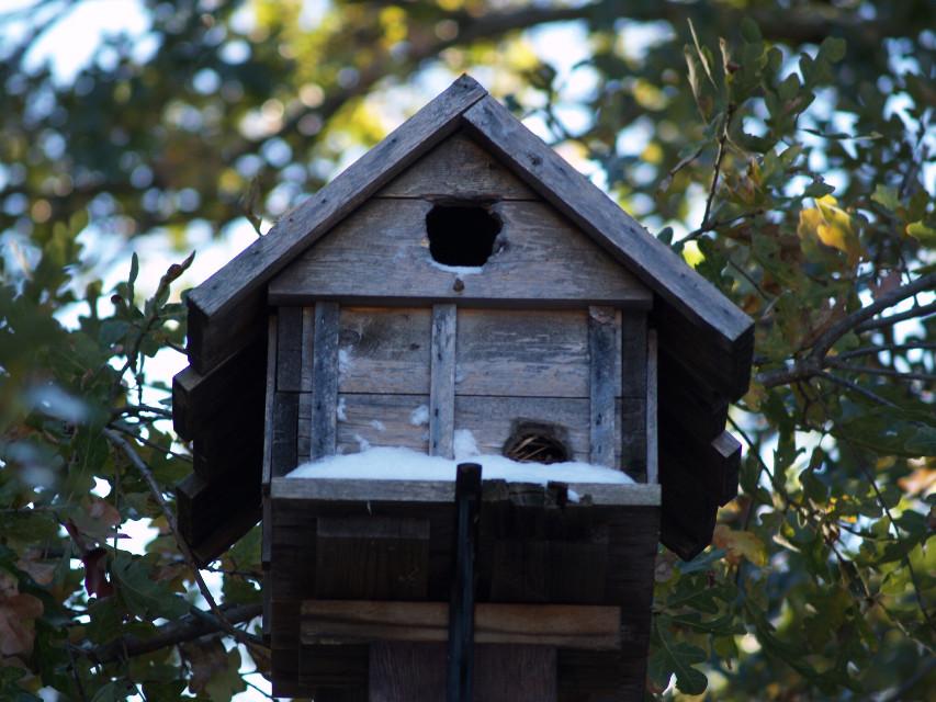 #birdhouse #ourwinter #FreeToEdit