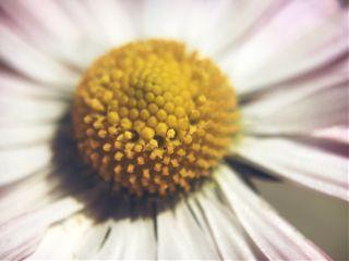 macro macrophotography flowers olloclip olloclipmacro14x