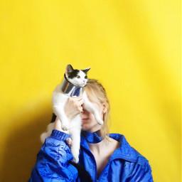 freetoedit cat cats yellow art