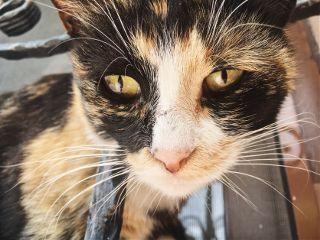iphoneography vsco cats adoribleanimals catslover