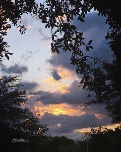 sunrise nature trees photography