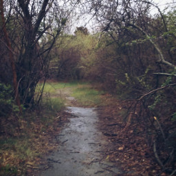freetoedit hikingtrails adventure family rain