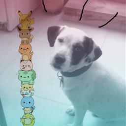animal pets freetoedit