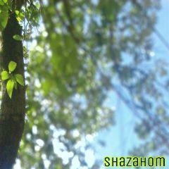 dpcgreen shazahom1 photography blur tree
