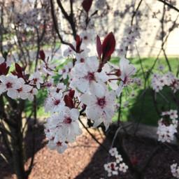 spring flowers nature brighten
