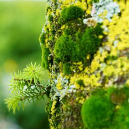 misture plant green moss nature
