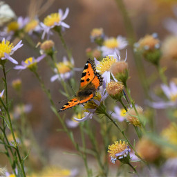 butterfly flowers nature colorfull nikond5300