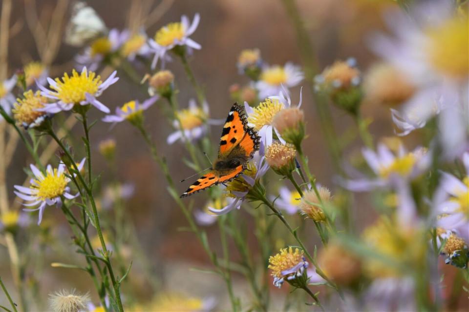 #butterfly  #flowers #nature  #colorfull #nikond5300  #paradaise #beutiful_iran  #photography #landscape #views  #close_up #outdoor #ak_30 #lenzak  #ایران_زیبا #پروانه #گل #طبیعت_گردی  #بهشت  #نیکون_d5300