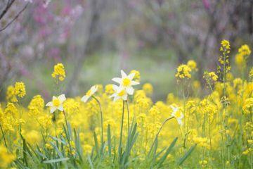 freetoedit japan nature photography spring