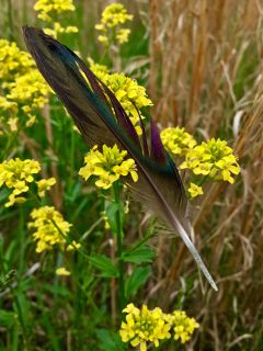 nature photography feather colorful