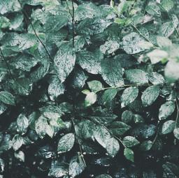 freetoedit pcgreen green
