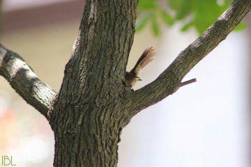 freetoedit remix remixme birds tails