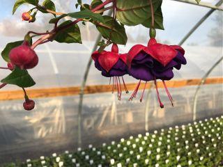 nature flower plants colorful freetoedit