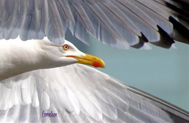 photography bird gull nofilter myphoto