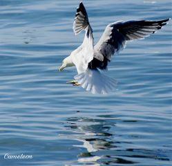 gull travel sea myphoto photography
