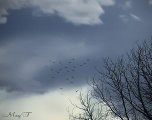 freetoedit photography nature tree trees