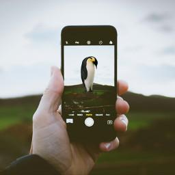 freetoedit penguin myinspiration penguinday phoneart