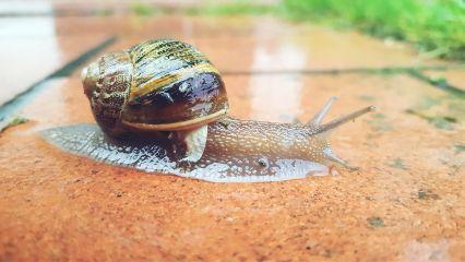 freetoedit photography snail nature
