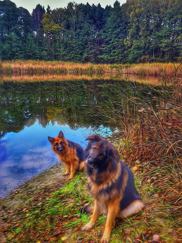 #myphotography #mylandscape #mydogs #germanshepherds  #oilpainteffect a little
