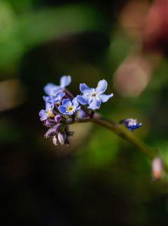 flower flowers macro nature bokeh freetoedit