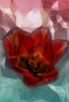 effects tulip red coloured @csefi