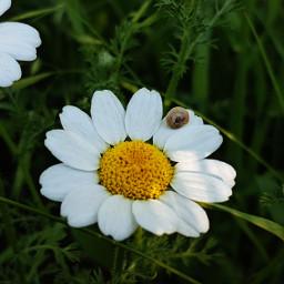 flower cute love