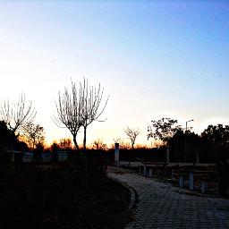 freetoedit sunset tree hdr