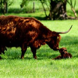 freetoedit newborn firstkiss love highlander