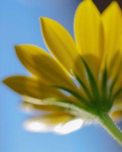 flower flowerphotography flowerporn flowerart yellow
