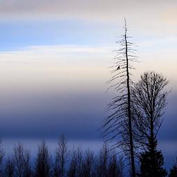 tree sky skyart bird crow