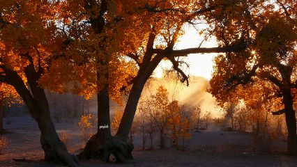 forest evening autumnleaves autumn photography