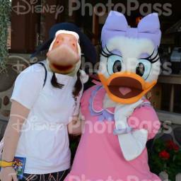 freetoedit goose duck daisyduck photobomb