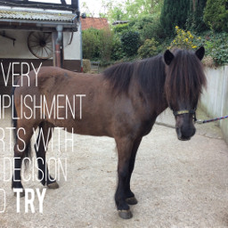 isilove glanni isi pony horse