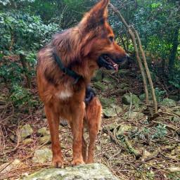 freetoedit lobo dog mydog momentslikethese
