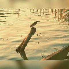 freetoedit bird oldphoto petsandanimals