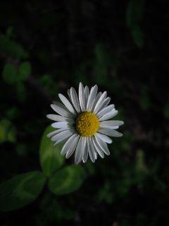 sundayfunday natural minidaisy daisy minimalism