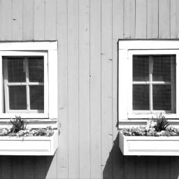 farm windows blackandwhite