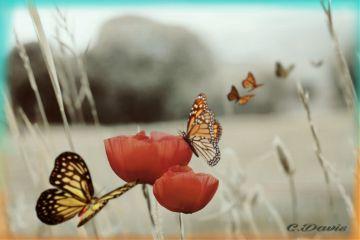 freetoedit myedit butterflies nature beauty