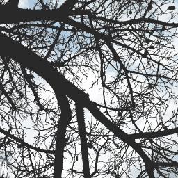 freetoedit treeoflife returns summeriscoming