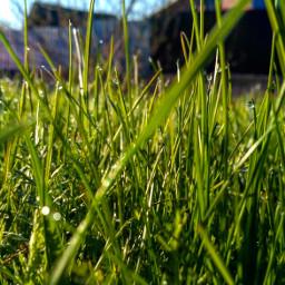 photo beautiful красиво трава grassfield freetoedit