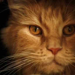 cat princess mylove