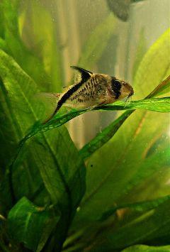 freetoedit fish tank leaf plamt