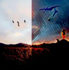 bird_migration freetoedit